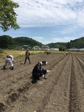 2016種まき-1野蒜